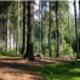 Medzinárodný deň lesov a stromov